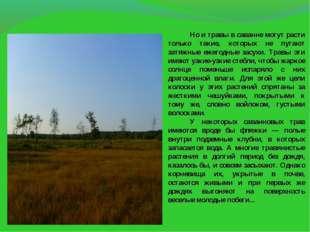 Но и травы в саванне могут расти только такие, которых не пугают затяжные