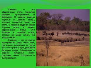 Саванна — это африканская степь, покрытая редкими кустарниками и деревьям