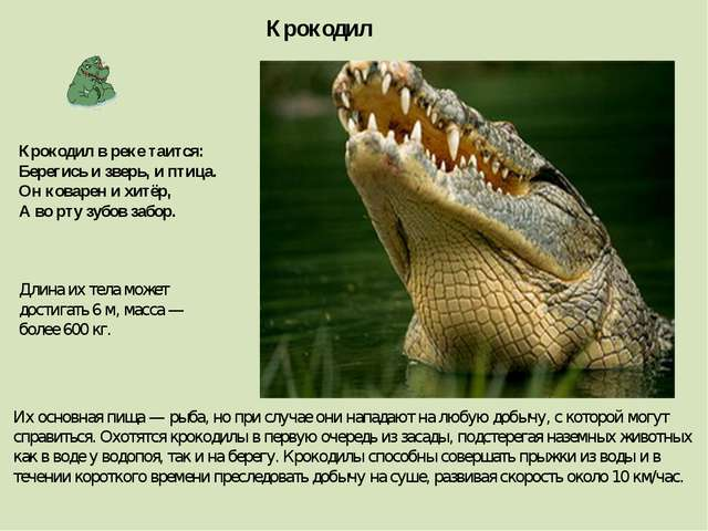 Крокодил Длина их тела может достигать 6 м, масса — более 600 кг. Их основная...