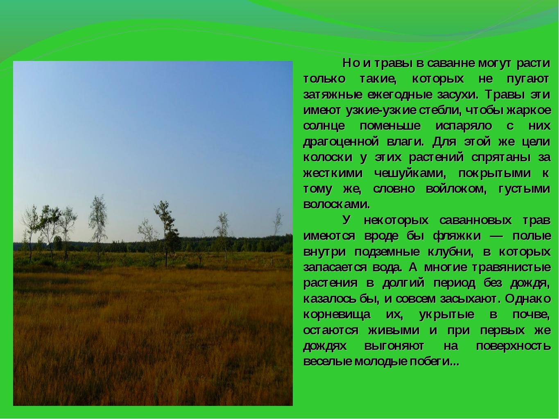 Но и травы в саванне могут расти только такие, которых не пугают затяжные...