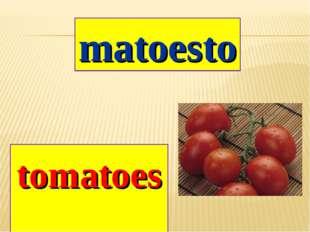 matoesto tomatoes