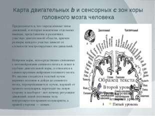 Карта двигательных b и сенсорных с зон коры головного мозга человека Предпола