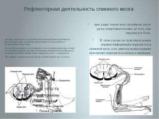 Рефлекторная деятельность спинного мозга при ударе током или случайном уколе