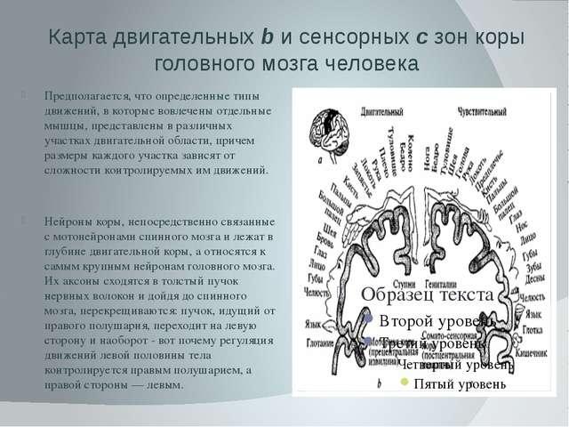 Карта двигательных b и сенсорных с зон коры головного мозга человека Предпола...
