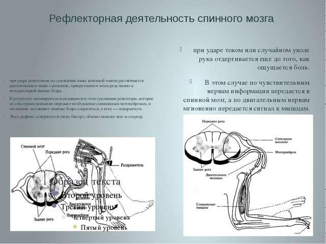 Рефлекторная деятельность спинного мозга при ударе током или случайном уколе...