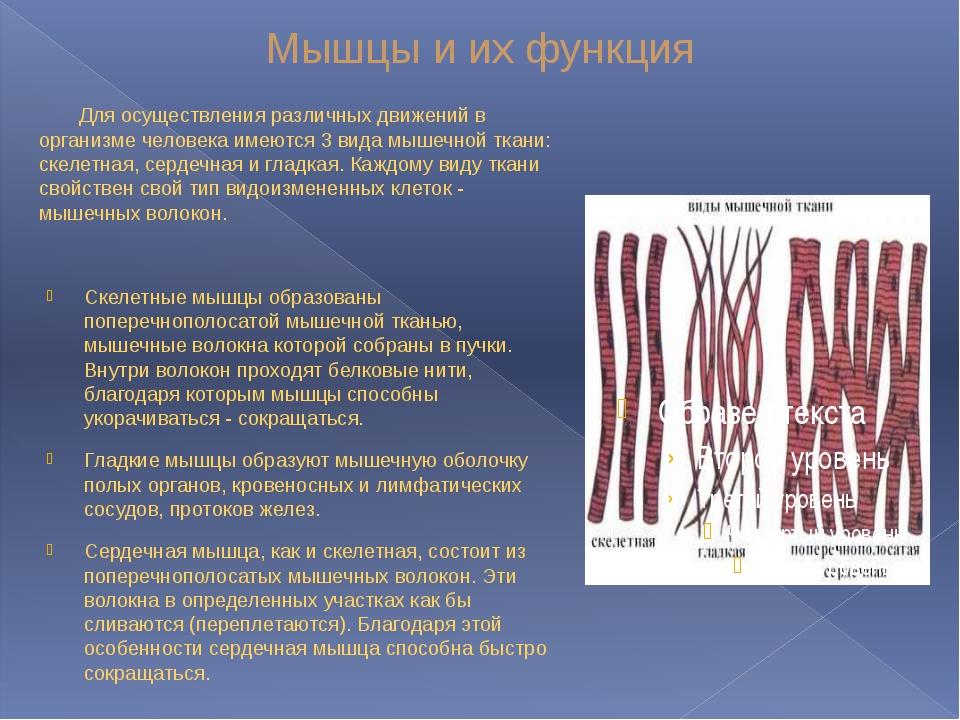 Мышцы и их функция Для осуществления различных движений в организме человека...