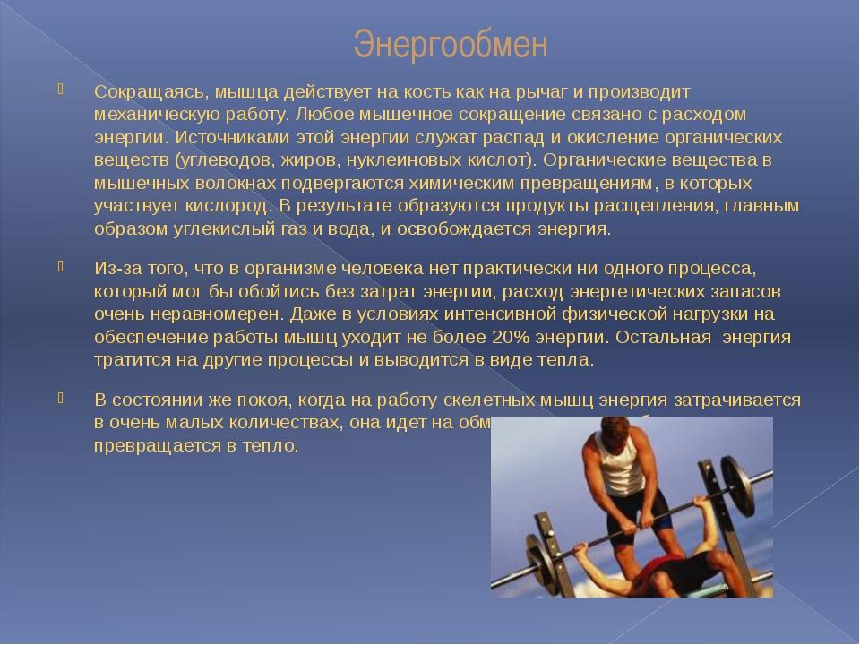 Энергообмен Сокращаясь, мышца действует на кость как на рычаг и производит ме...