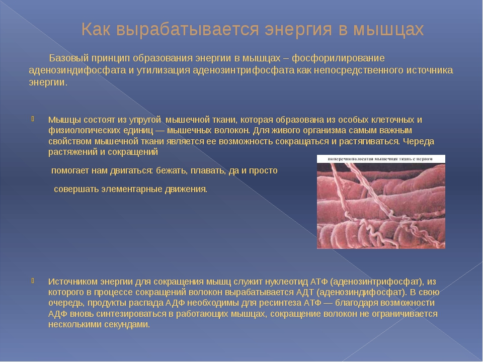 Как вырабатывается энергия в мышцах Базовый принцип образования энергии в мыш...