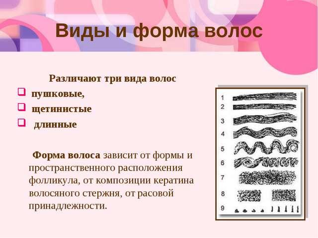 Виды и форма волос Различают три вида волос пушковые, щетинистые длинные Форм...