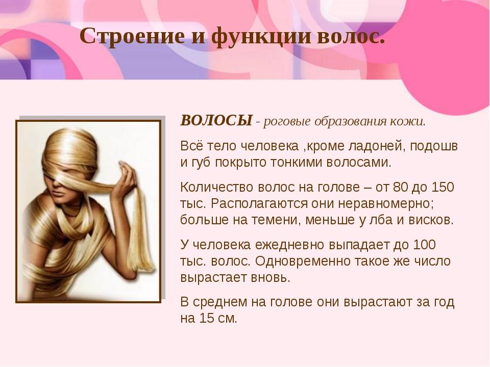 Строение и функции волос. ВОЛОСЫ - роговые образования кожи. Всё тело человек...