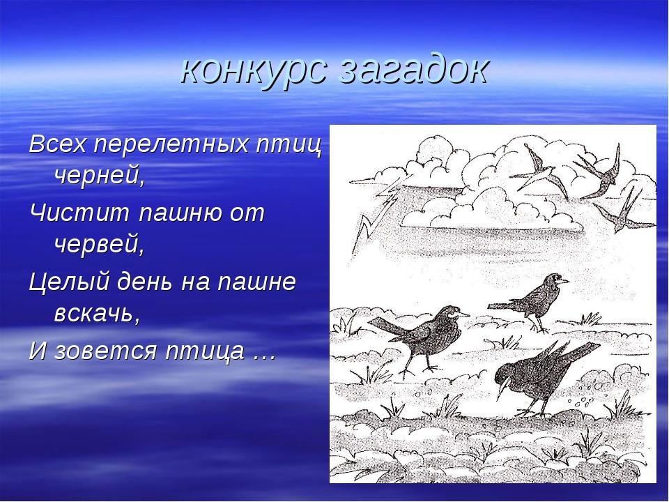 конкурс загадок Всех перелетных птиц черней, Чистит пашню от червей, Целый де...