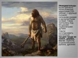 Неандертальцы были крепкого телосложения, невысокие(155-165см), с крупной го