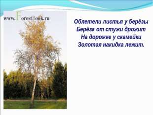 Облетели листья у берёзы Берёза от стужи дрожит На дорожке у скамейки Золотая