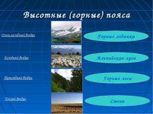 Высотные (горные) пояса Степи Горные леса Альпийские луга Горные ледники Очен