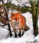 Кубрякова Елена Борисовна Живая и неживая природа зимой Цели урок