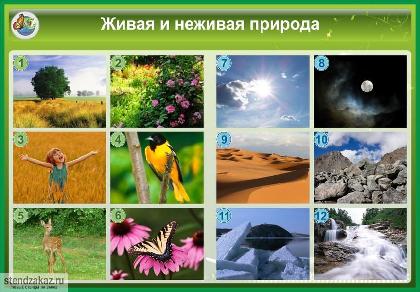 Доклад на тему отличие живой от неживой природы 5 класс