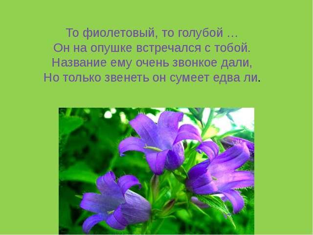 То фиолетовый, то голубой … Он на опушке встречался с тобой. Название ему оче...
