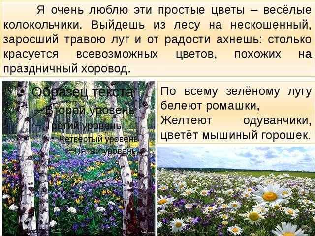Я очень люблю эти простые цветы – весёлые колокольчики. Выйдешь из лесу на н...