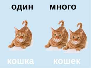 помидор помидоров один много кошка кошек один много