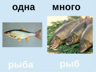 помидор помидоров один много одна много рыба рыб