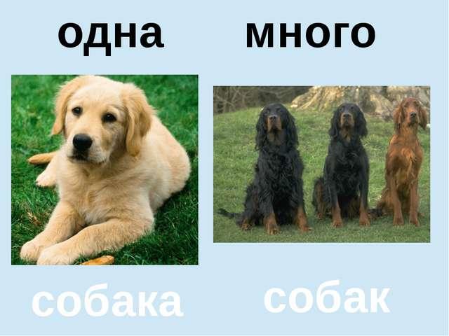 помидор помидоров один много собака собак одна много