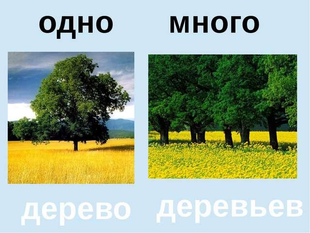помидор помидоров один много дерево деревьев одно много