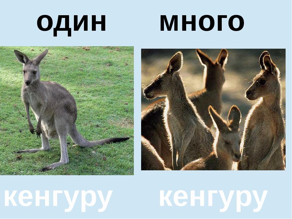 помидор помидоров один много кенгуру кенгуру один много