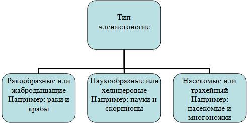 http://festival.1september.ru/articles/522083/img1.jpg