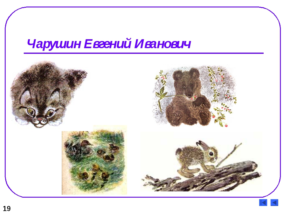 Чарушин Евгений Иванович 19