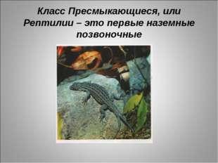 Класс Пресмыкающиеся, или Рептилии – это первые наземные позвоночные
