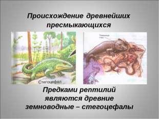 Происхождение древнейших пресмыкающихся Предками рептилий являются древние зе