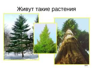 * Живут такие растения