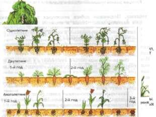 Многообразие покрытосеменных. Среди покрытосеменных есть деревья, кустарники