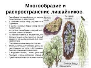 Многообразие и распространение лишайников. Лишайники разнообразны по внешнему