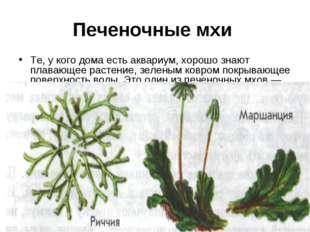 Печеночные мхи Те, у кого дома есть аквариум, хорошо знают плавающее растение