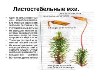 Листостебельные мхи. Один из самых известных листо-стебельных зеленых мхов —