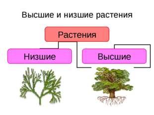 Высшие и низшие растения