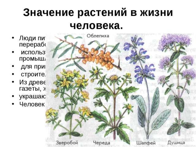Значение растений в жизни человека. Люди питаются растениями и продуктами их...