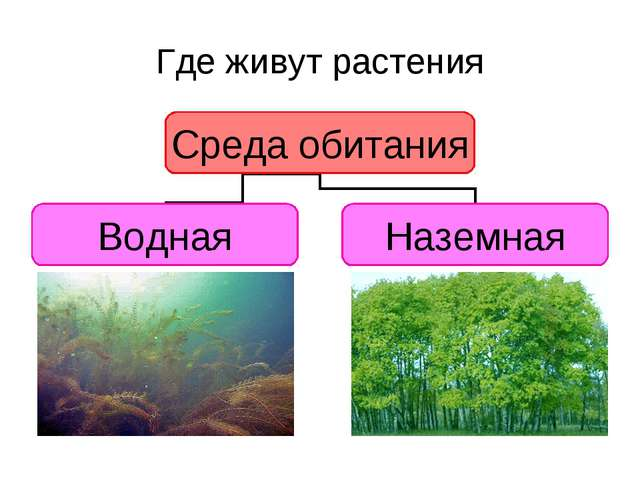 Где живут растения