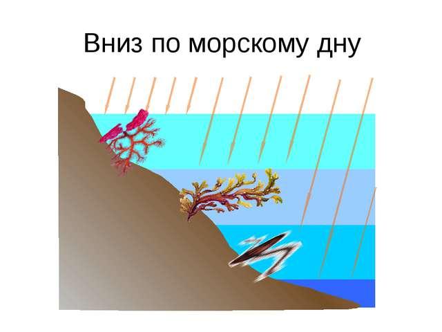Вниз по морскому дну