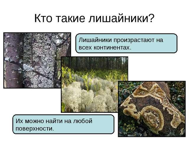 Кто такие лишайники? Лишайники произрастают на всех континентах. Их можно най...