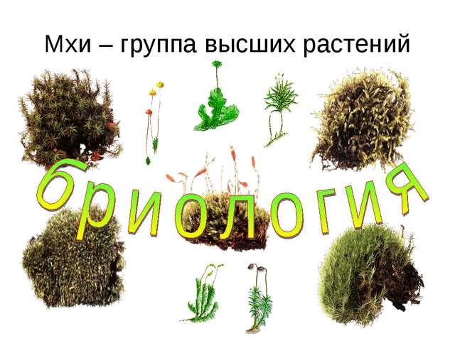 Мхи – группа высших растений