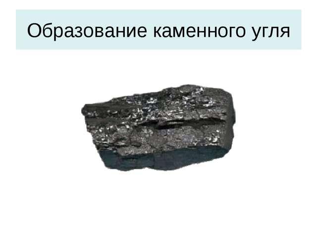 Образование каменного угля