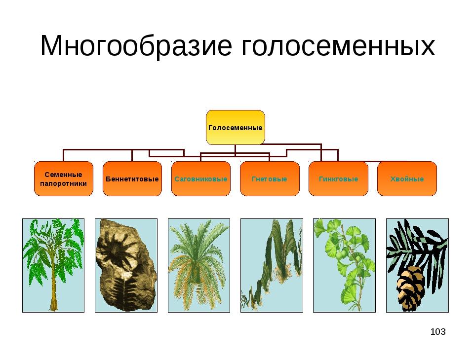 Псилофиты развитые споровые растения семенные папоротники лиственные голосеменные хвойные голосеменные подробно