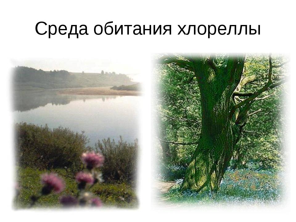 Среда обитания хлореллы