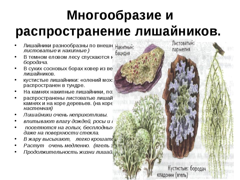 Многообразие и распространение лишайников. Лишайники разнообразны по внешнему...