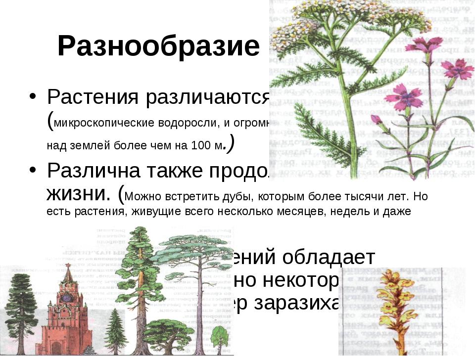 Разнообразие растений. Растения различаются по размерам. (микроскопические во...