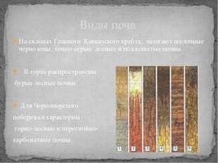 На склонах Главного Кавказского хребта, залегают щелочные черноземы, темно-се