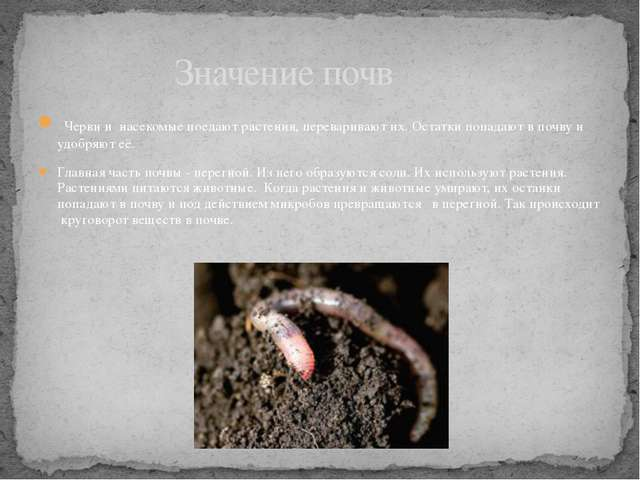 Черви и насекомые поедают растения, переваривают их. Остатки попадают в почв...