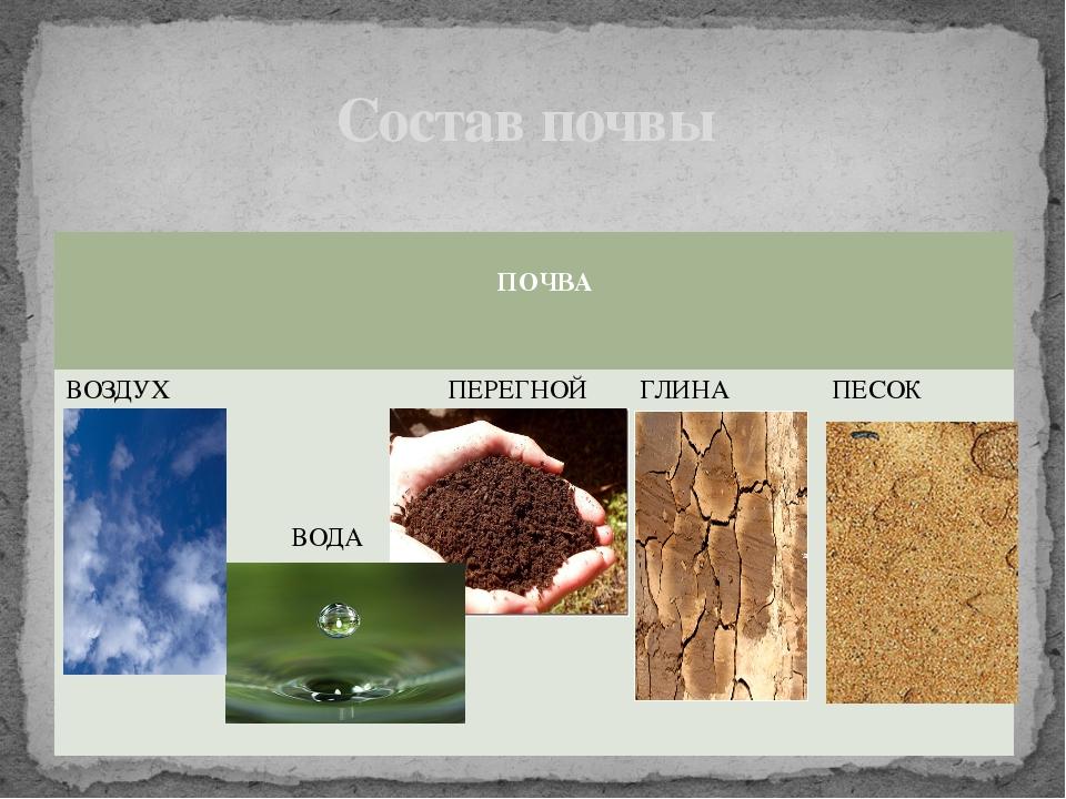 Состав почвы ПОЧВА ВОЗДУХ ВОДА ПЕРЕГНОЙ ГЛИНА ПЕСОК